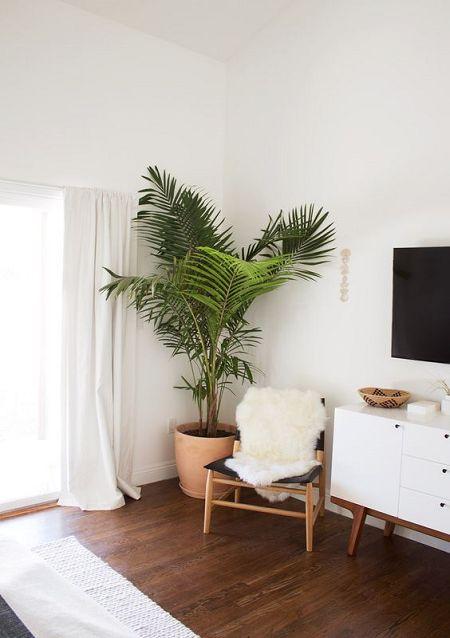 Tendencia Decorar Tu Salon Con Grandes Plantas De Interior Blog