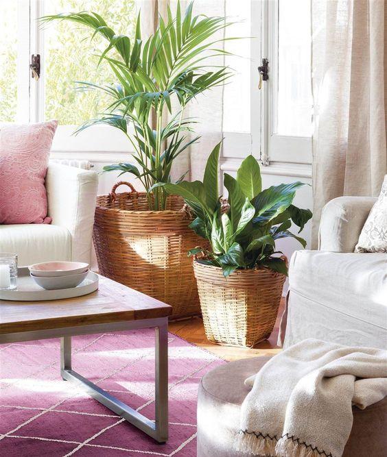 Tendencia decorar tu sal n con grandes plantas de - Plantas grandes para interiores ...